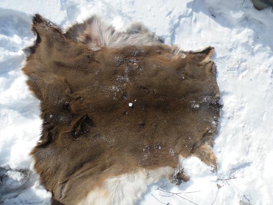 Deer Skin Furry Side