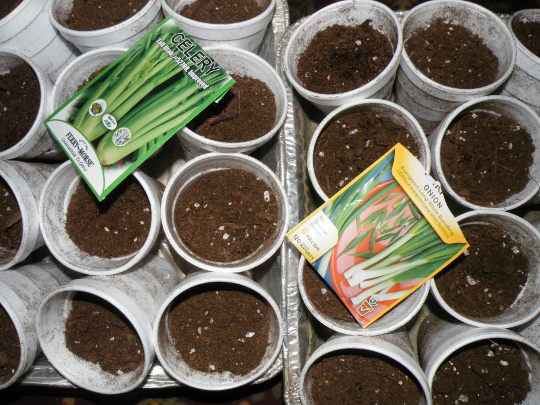 Celery and Onions Seeds